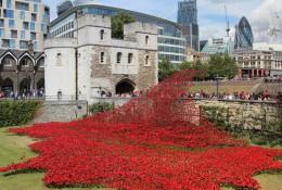 "Memorial art display ""Blood Swept Lands and Seas of Red"""